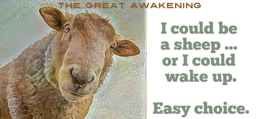 be sheep or wake up